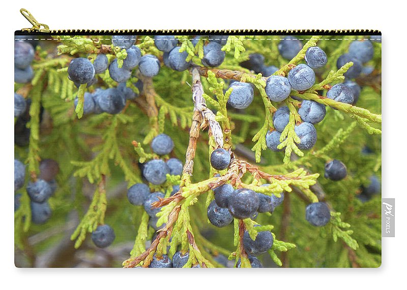 North Dakota Carry-all Pouch featuring the photograph Juniper Berries by Cris Fulton