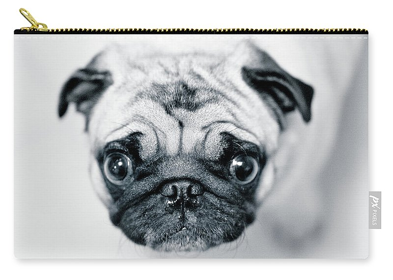 Pets Carry-all Pouch featuring the photograph Just Enough by Eddy Joaquim
