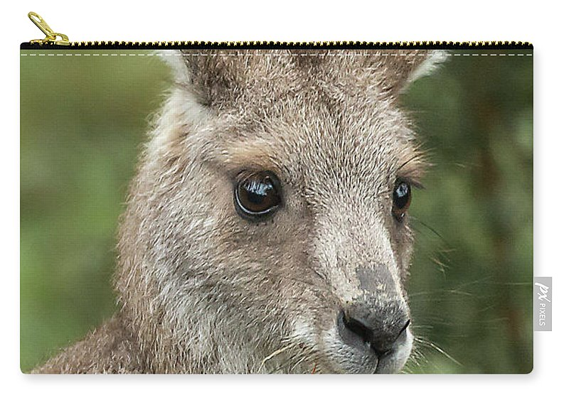 Kangaroo Carry-all Pouch featuring the photograph Kangaroo Up Close by Barry Kearney