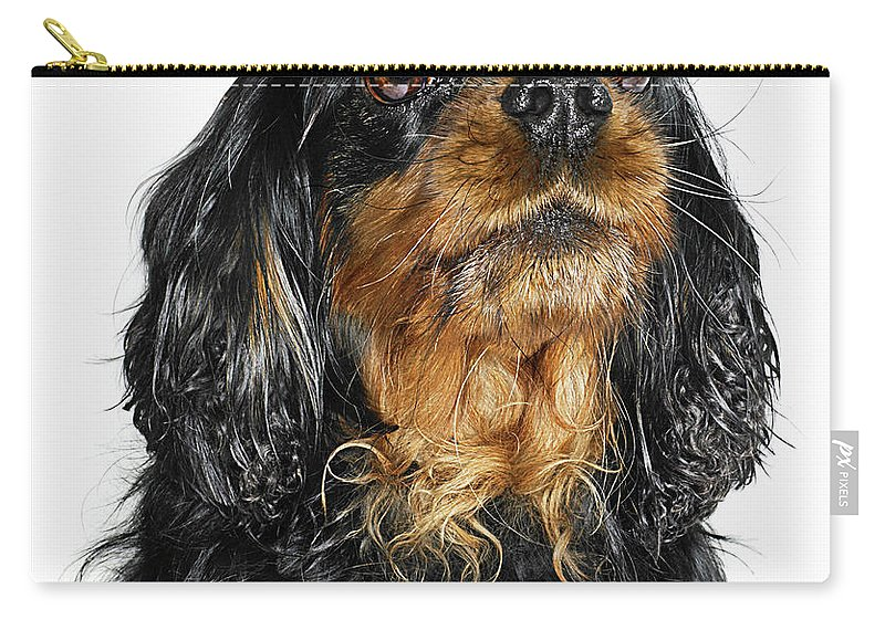 Pets Carry-all Pouch featuring the photograph King Charles Cavalier Portrait by Gandee Vasan