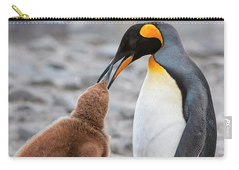 Care Carry-all Pouch featuring the photograph King Penguin Feeding A Chick by Gabrielle Therin-weise