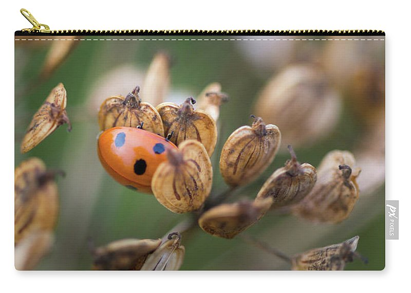 Nature Carry-all Pouch featuring the photograph Lady Bird / Lady Bug In Flower Seed Head by Anita Nicholson