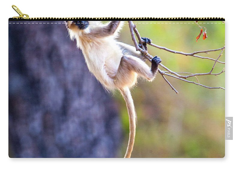 Langur Monkey Hanging On Tree Branch Carry All Pouch For Sale By Panoramic Images