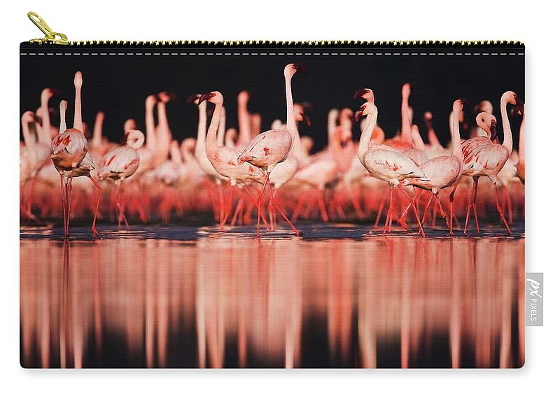 Kenya Carry-all Pouch featuring the photograph Lesser Flamingos Phoenicopterus Ruber by Jami Tarris