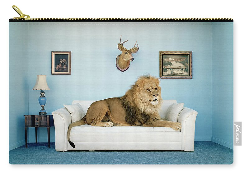 Pets Carry-all Pouch featuring the photograph Lion Lying On Couch, Side View by Matthias Clamer