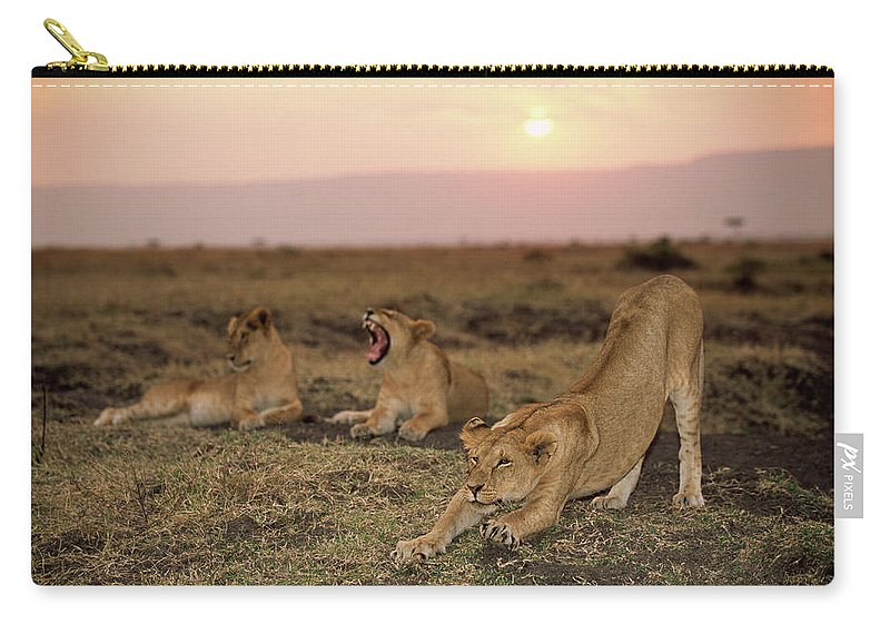 Kenya Carry-all Pouch featuring the photograph Lioness Panthera Leo Stretching Beside by James Warwick
