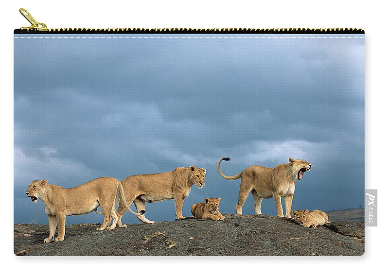Kenya Carry-all Pouch featuring the photograph Lionesses And Cubs Panthera Leo On by James Warwick