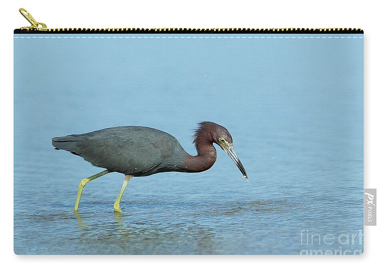 Waterfowl Carry-all Pouch featuring the photograph Little Blu by Beve Brown-Clark Photography