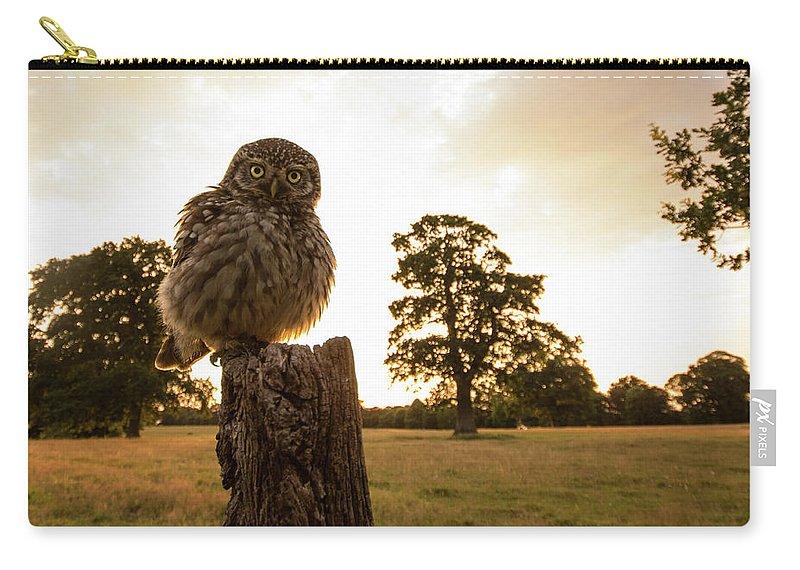 Allen Trivett Carry-all Pouch featuring the photograph Little Owl Sunset by Allen Trivett