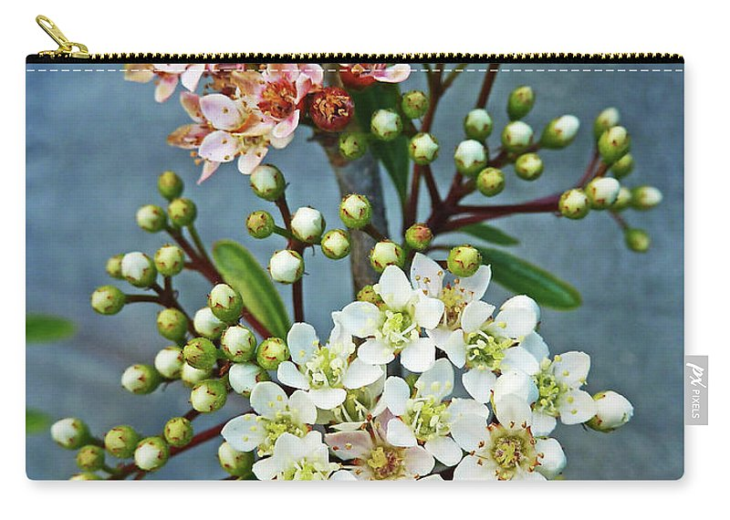Bud Carry-all Pouch featuring the photograph Little Star Like Buds by Steve Taylor Photography