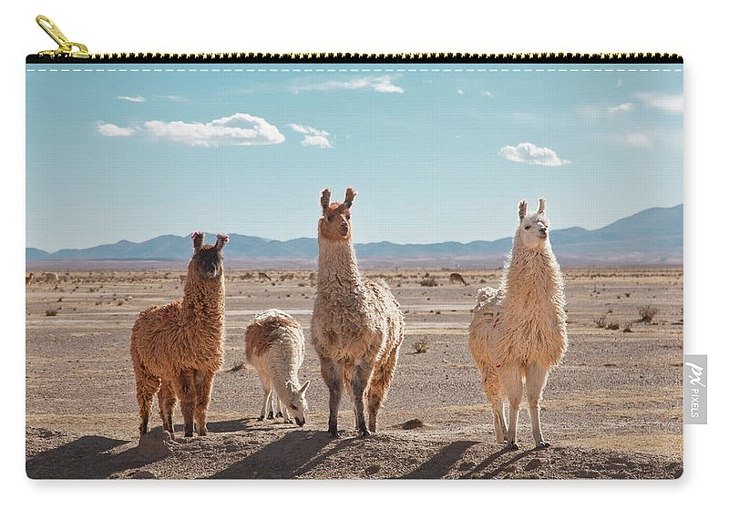 Shadow Carry-all Pouch featuring the photograph Llamas Posing In High Desert by Kathrin Ziegler