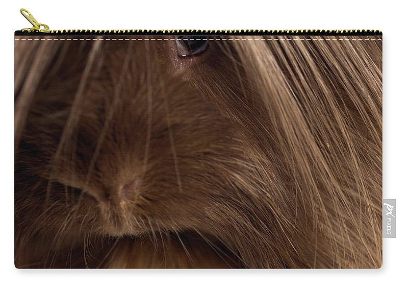 Pets Carry-all Pouch featuring the photograph Long Haired Guinea Pig, Close-up by Michael Blann