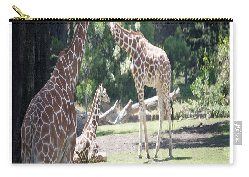 Giraffes Carry-all Pouch featuring the photograph Long Necks by Andrew Bates