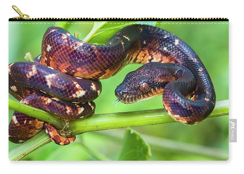 Photography Carry-all Pouch featuring the photograph Madagascar Ground Boa Acrantophis by Panoramic Images