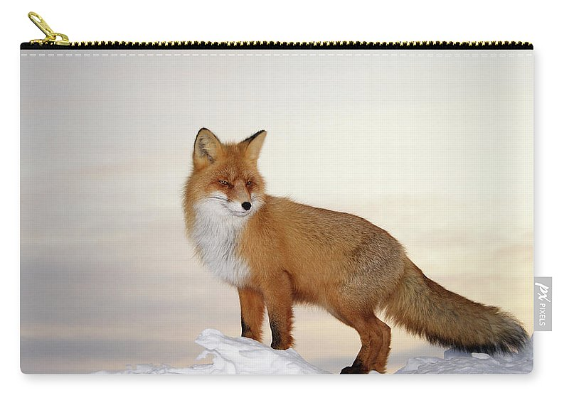 Black Color Carry-all Pouch featuring the photograph Majestic Fox by Dmitrynd
