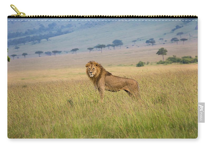 Kenya Carry-all Pouch featuring the photograph Male Lion In The Savanna Masai Mara by Seppfriedhuber