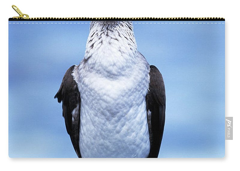 Animal Themes Carry-all Pouch featuring the photograph Masked Booby Sula Dactylatra Galapagos by Art Wolfe
