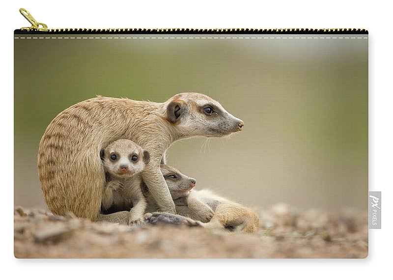 Care Carry-all Pouch featuring the photograph Meerkat Pups With Adult, Namibia by Paul Souders
