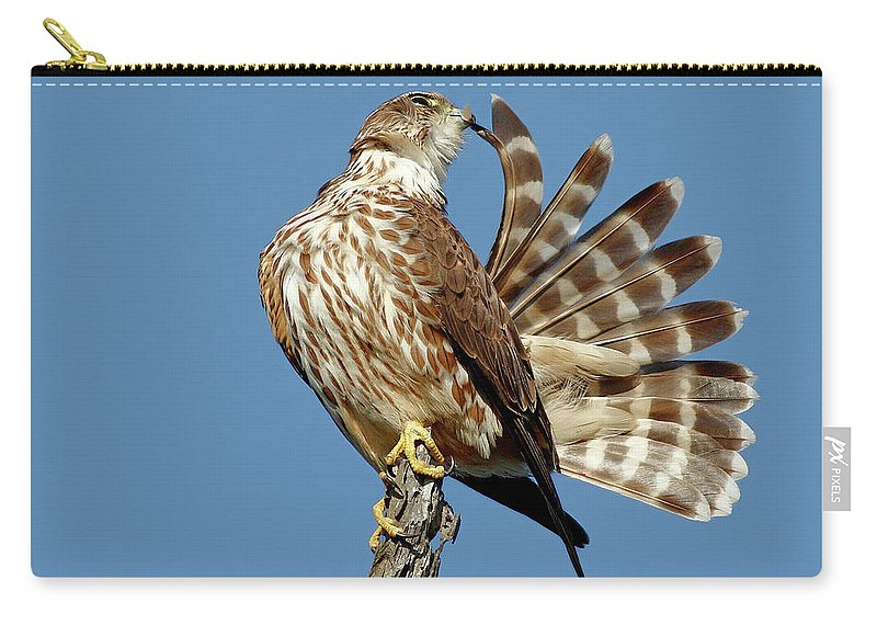 Animal Themes Carry-all Pouch featuring the photograph Merlins Grooming Session by Bmse