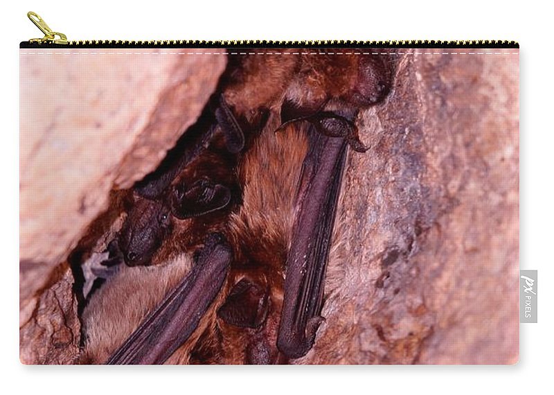 Animal Wildlife Carry-all Pouch featuring the photograph Mexican Free-tailed Bats by Dennis Boyd