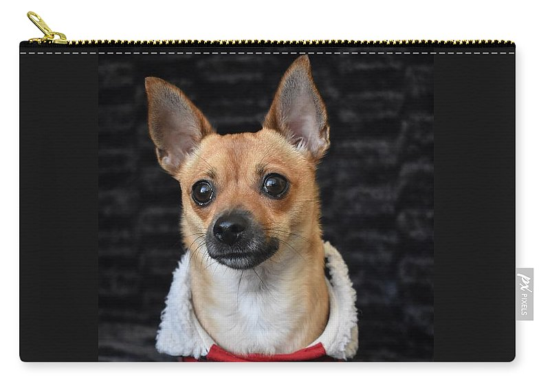Chihuahua Carry-all Pouch featuring the digital art Miracle by Cassidy Marshall