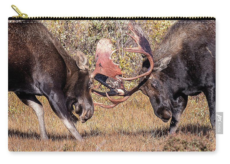 Moose Carry-all Pouch featuring the photograph Moose Bulls Spar Close Up by Tony Hake