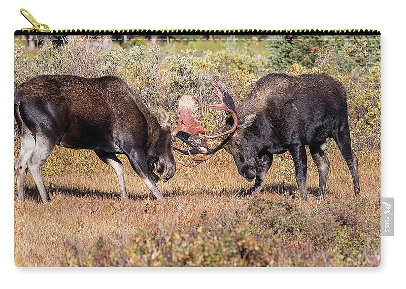 Moose Carry-all Pouch featuring the photograph Moose Bulls Spar In The Colorado High Country by Tony Hake