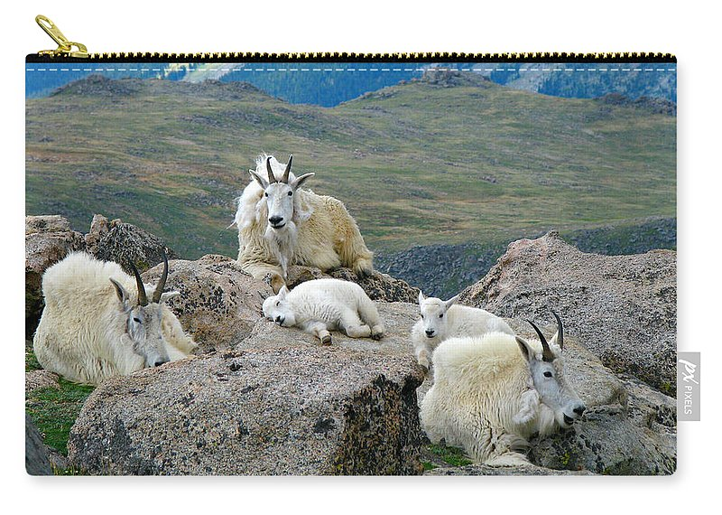 Horned Carry-all Pouch featuring the photograph Mountain Goats In The Rocky Mountains by Carl Neufelder