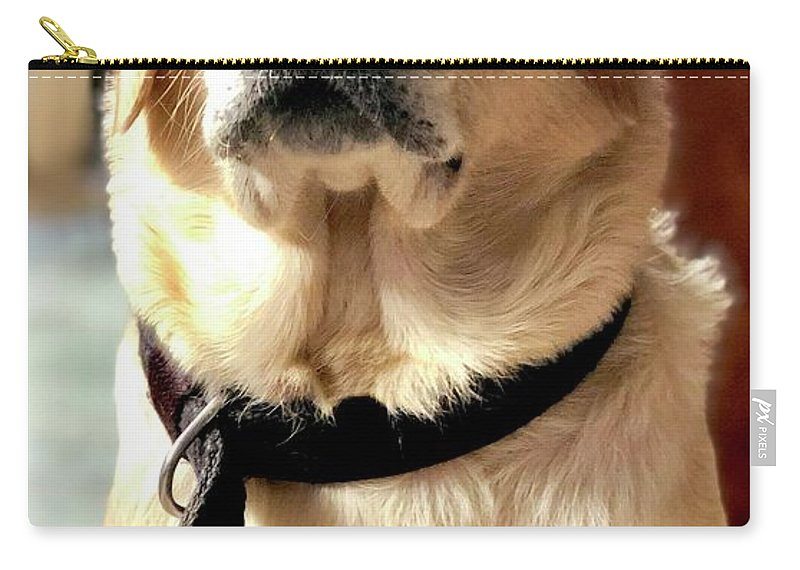 Labrador Dog Carry-all Pouch featuring the photograph Labrador Dog by Arun Jain