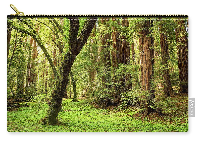 Tranquility Carry-all Pouch featuring the photograph Muir Woods Forest by By Ryan Fernandez