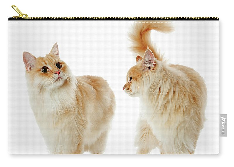 Humor Carry-all Pouch featuring the photograph Munchkin Cats by Ultra.f
