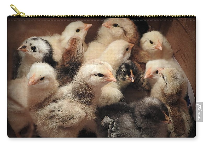 Chicks Carry-all Pouch featuring the photograph New Additions by Charlotte Schafer