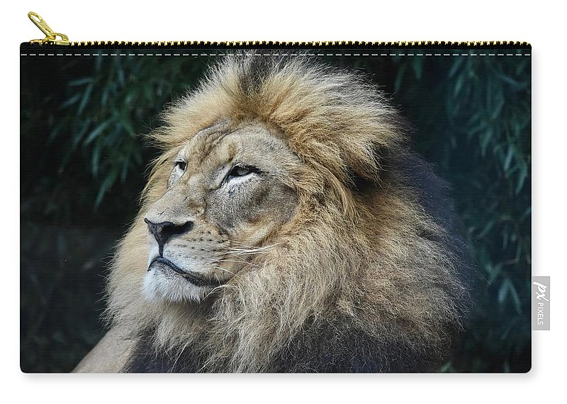 Lions Carry-all Pouch featuring the photograph Nothing To Fear by Laurie Hein