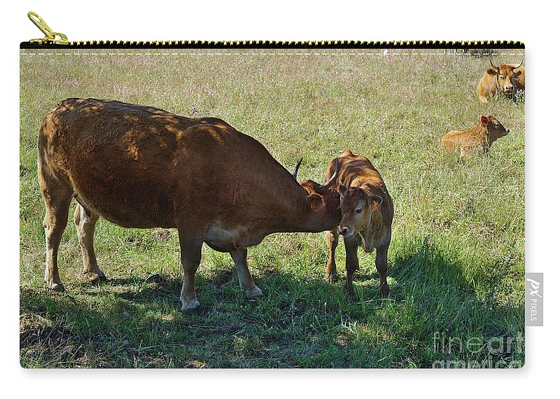 Cows Carry-all Pouch featuring the photograph Old And Young by Angelo DeVal