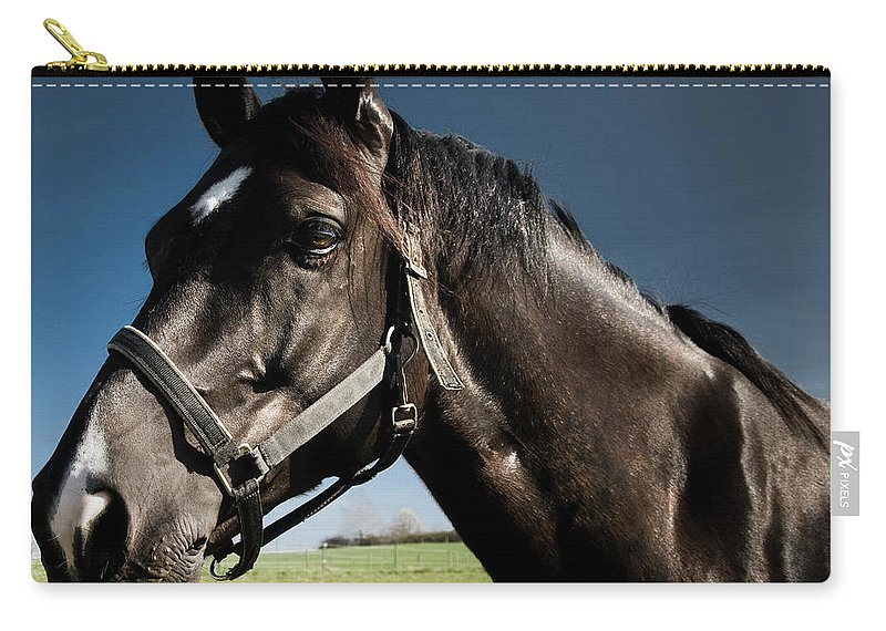 Horse Carry-all Pouch featuring the photograph On The Meadow by Pixalot