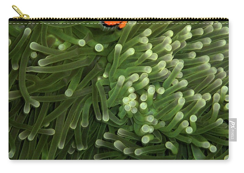 Underwater Carry-all Pouch featuring the photograph Orange Fish With Yellow Stripe by Perry L Aragon