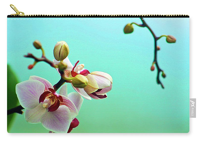 Petal Carry-all Pouch featuring the photograph Orchids Out For A Breath Of Fresh Air by Photo By Alan Shapiro