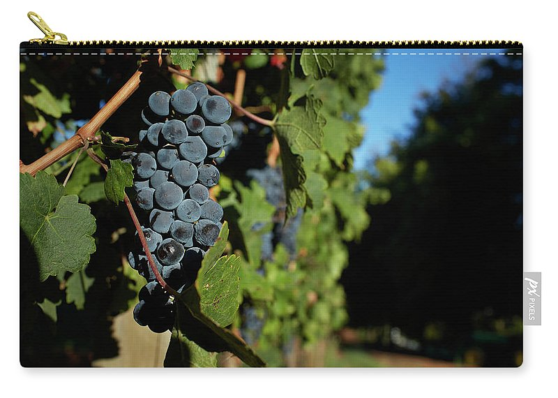 Stellenbosch Carry-all Pouch featuring the photograph Overripe Grapes Hanging On Vine by Klaus Vedfelt
