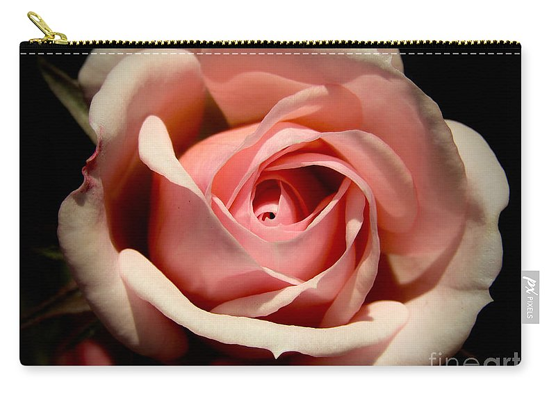 Pale Pink Rose Carry-all Pouch featuring the photograph Pale Pink Rose by Vanessa Yi-Kai Tsai