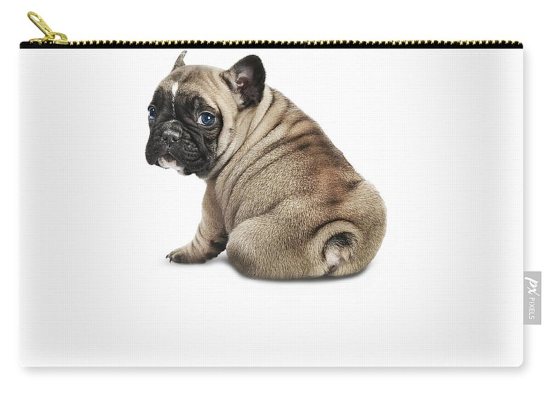 Pets Carry-all Pouch featuring the photograph Pedigree French Bulldog Against A White by Andrew Bret Wallis