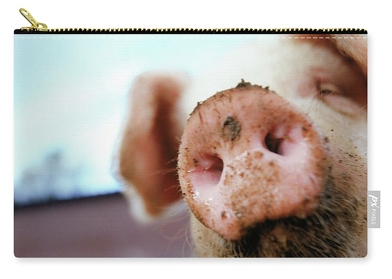 Pig Carry-all Pouch featuring the photograph Pig by Matt Carr