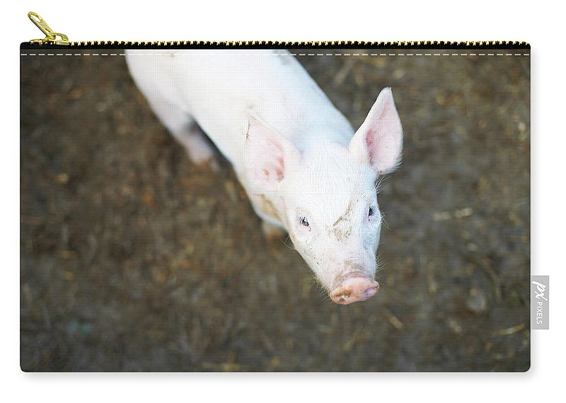 Pig Carry-all Pouch featuring the photograph Pig Standing In Dirt Field by Peter Muller