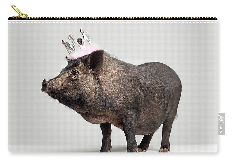 Crown Carry-all Pouch featuring the photograph Pig With Toy Crown On Head, Studio Shot by Roger Wright