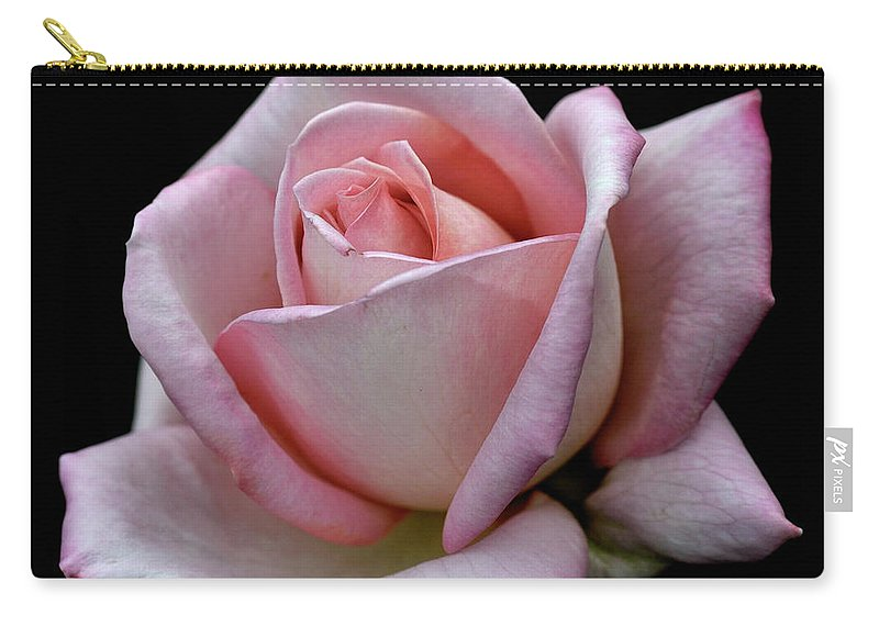 Part Of A Series Carry-all Pouch featuring the photograph Pink Rose by I Love Photo And Apple.