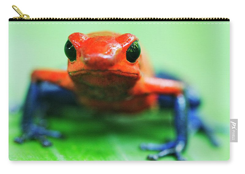 Animal Themes Carry-all Pouch featuring the photograph Poison Dart Frog by Jeremy Woodhouse