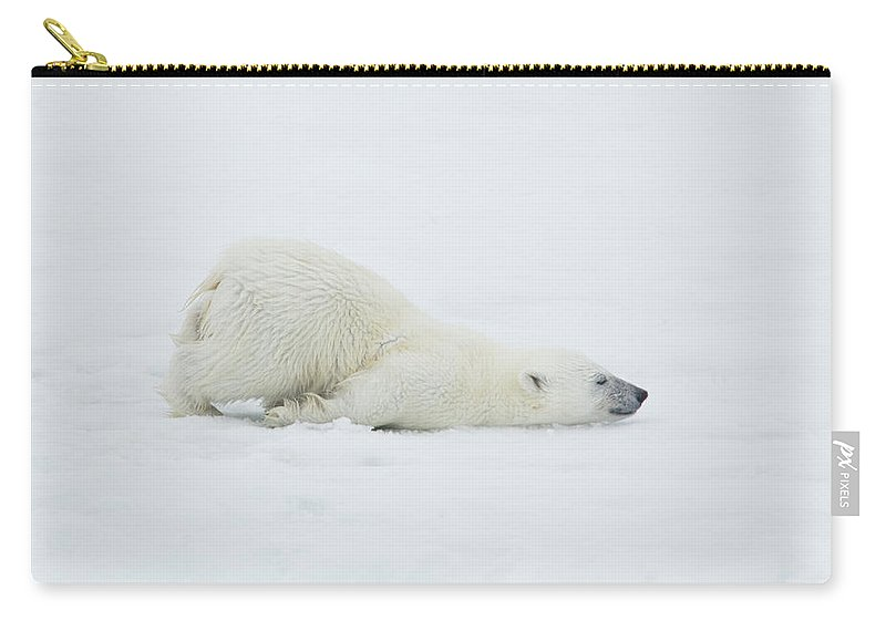 Svalbard Islands Carry-all Pouch featuring the photograph Polar Bear Cub Stretching Out On Ice by Darrell Gulin