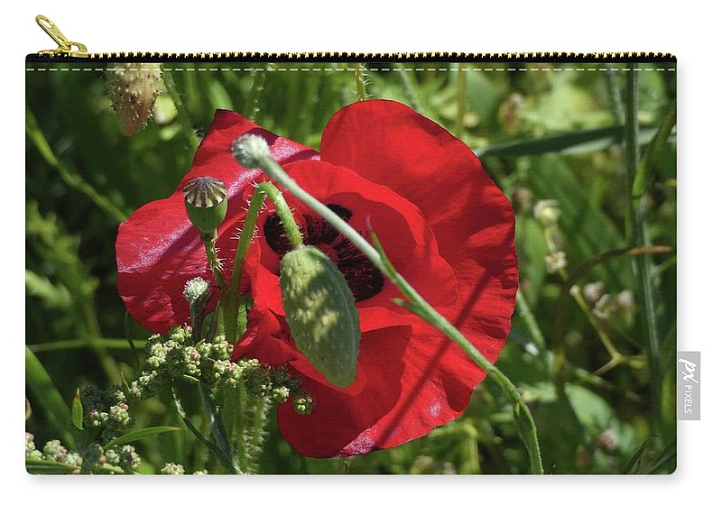 Poppy Carry-all Pouch featuring the photograph Poppy by Ingrid Huetten
