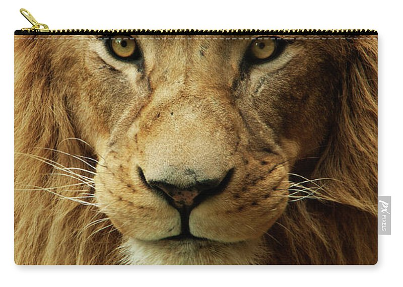 Animal Themes Carry-all Pouch featuring the photograph Portrait Male African Lion by Brit Finucci