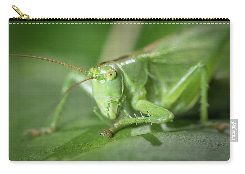 Nature Carry-all Pouch featuring the photograph Portrait Of A Great Green Bush-cricket Sitting On A Leaf by Stefan Rotter