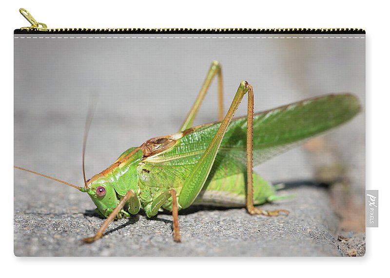 Nature Carry-all Pouch featuring the photograph Portrait Of A Great Green Bush-cricket Sitting On The Pavement by Stefan Rotter